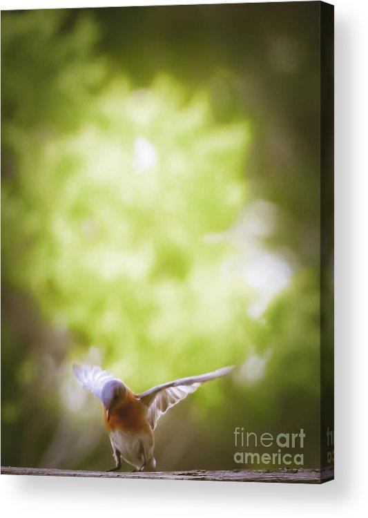 Bluebird Acrylic Print featuring the mixed media Bluebird by Kim Henderson