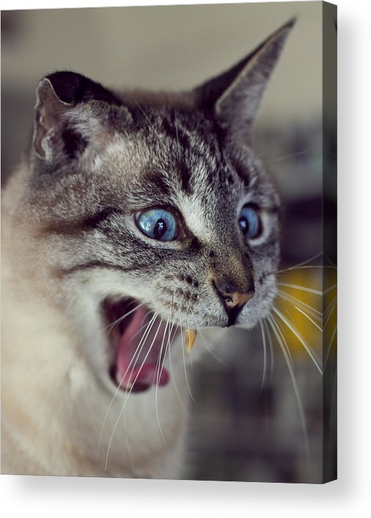 Cat Acrylic Print featuring the photograph Atlas Unleashed by Lynn Andrews