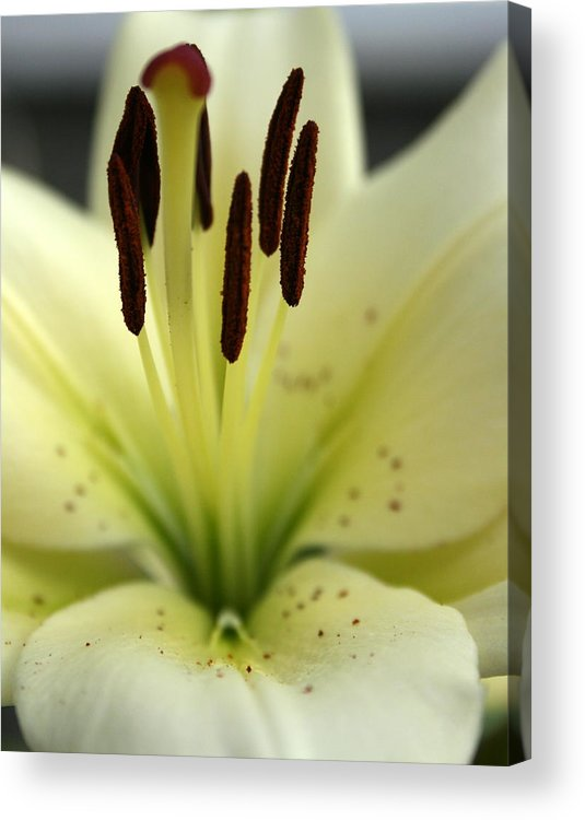 Flower Acrylic Print featuring the photograph Escaping Nostalgia by Stevie Smudge