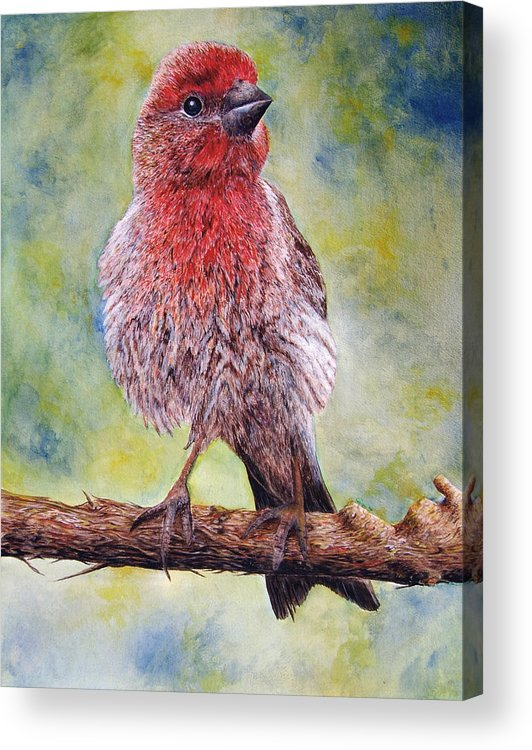 House Finch On Tree Branch Acrylic Print featuring the painting Finchy by JoLyn Holladay
