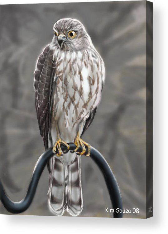 Birds Acrylic Print featuring the painting Hawk by Kim Souza