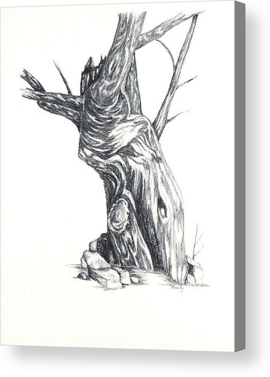 Tree Acrylic Print featuring the drawing Old Tree by Brandy House