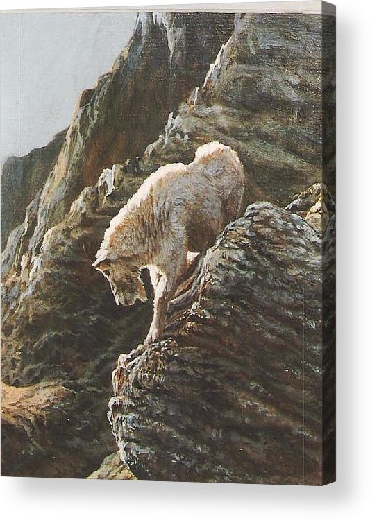 Goat Acrylic Print featuring the painting Rocky Mountain Goat by Steve Greco