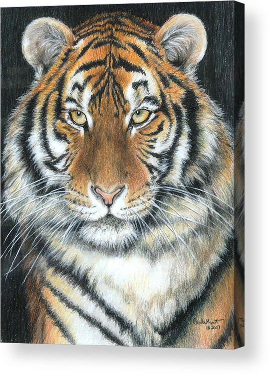 Tiger Acrylic Print featuring the drawing Songha by Carla Kurt