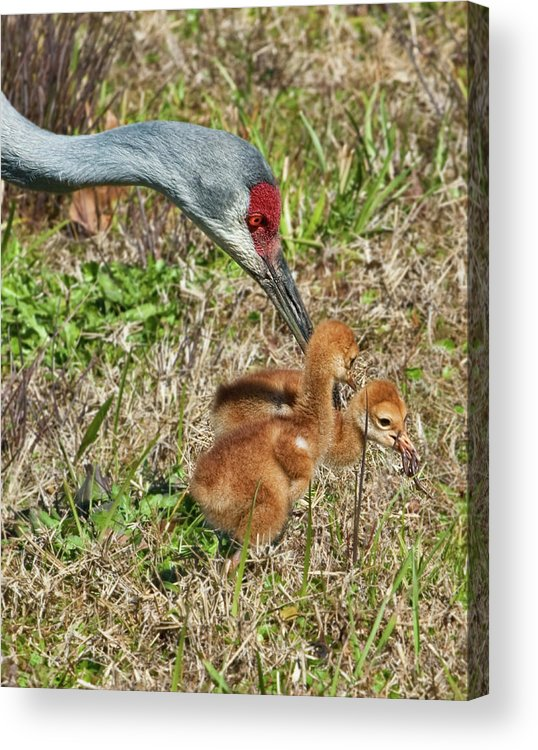 Birds Acrylic Print featuring the photograph This Is What We Eat by Delores Knowles