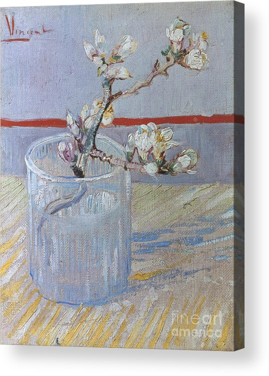 1888 Acrylic Print featuring the photograph Van Gogh: Branch, 1888 by Granger