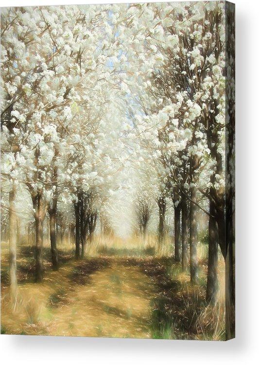 Bradford Pears Acrylic Print featuring the painting Walking Through A Dream Ap by Dan Carmichael