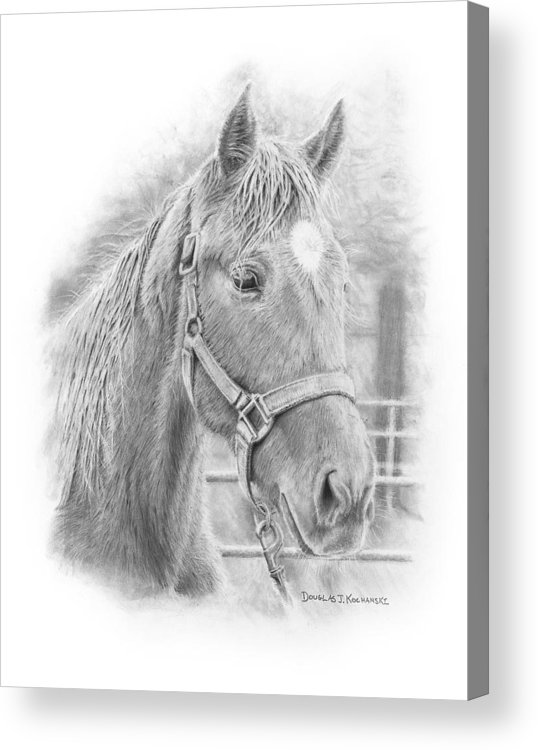 Horse Realistic Drawing Rendering Graphite Pencil Animal Western Acrylic Print featuring the drawing Whistler by Douglas Kochanski