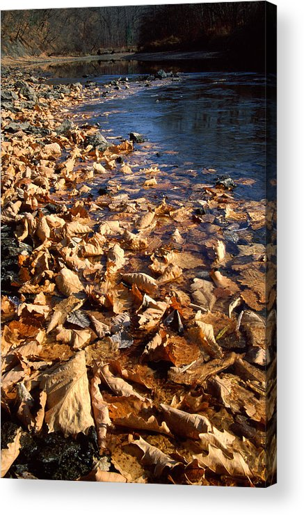 Autumn; Bank; Fall; Flora; Leaves; Nature; Nobody; Outdoors; Outside; Plant World; Plants; Seasons; Taiga; Water Acrylic Print featuring the photograph Ussurian Taiga Autumn by Anonymous
