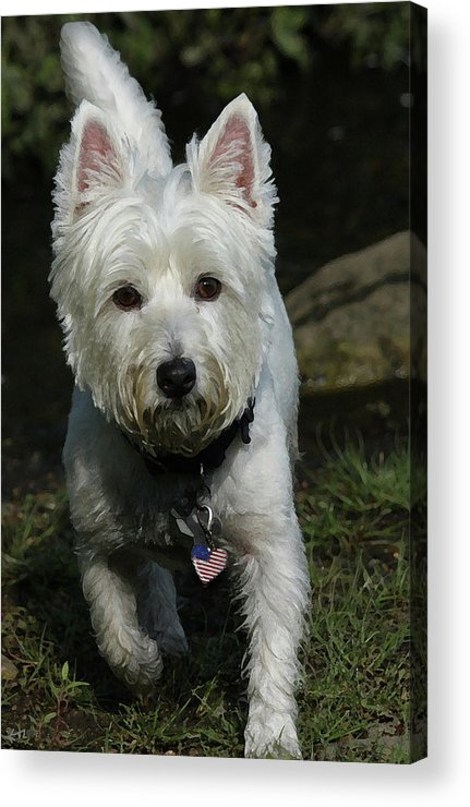 Dog Acrylic Print featuring the photograph Fuzzy by Karol Livote