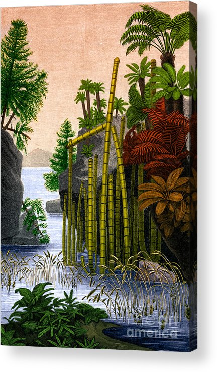 Science Acrylic Print featuring the photograph Plants Of The Triassic Period by Science Source