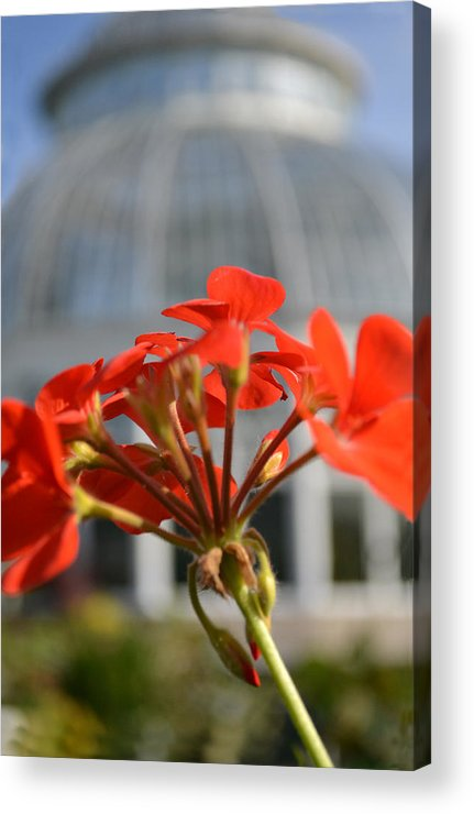 Red Flowers Acrylic Print featuring the photograph Standing Out by Bella Photography