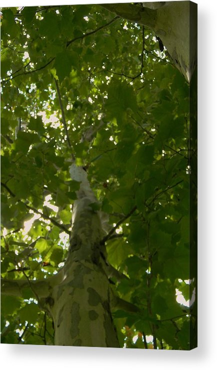 Summer Green Acrylic Print featuring the photograph Summer Green by Warren Thompson