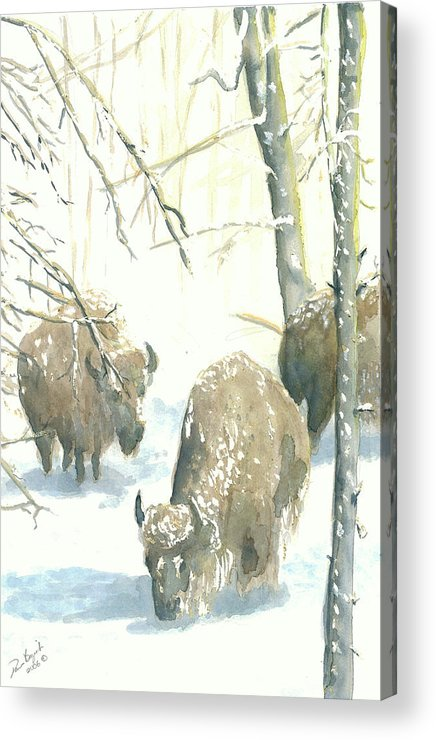 Buffalos After Snowstorm Acrylic Print featuring the painting Snow Buffs by Dan Bozich