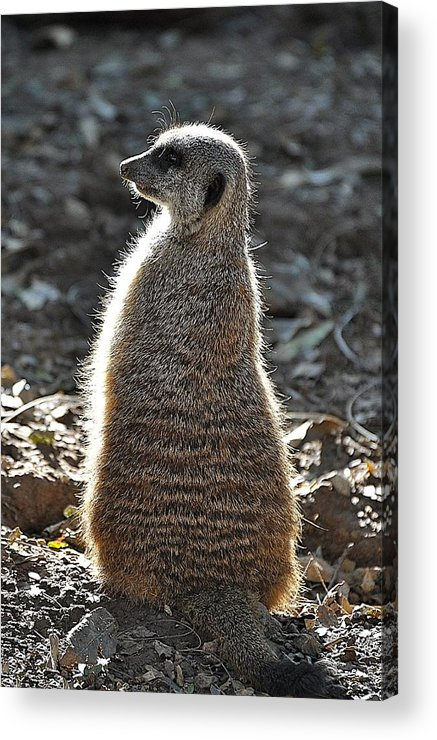 Animals Acrylic Print featuring the photograph All Aglow by Jan Amiss Photography