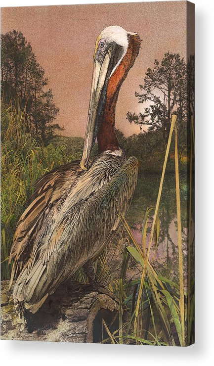 Pelican Acrylic Print featuring the painting Brown Pelican by John Dyess