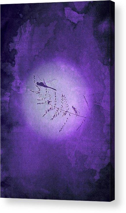 Dragon Acrylic Print featuring the digital art Dragonfly by Andrea Barbieri
