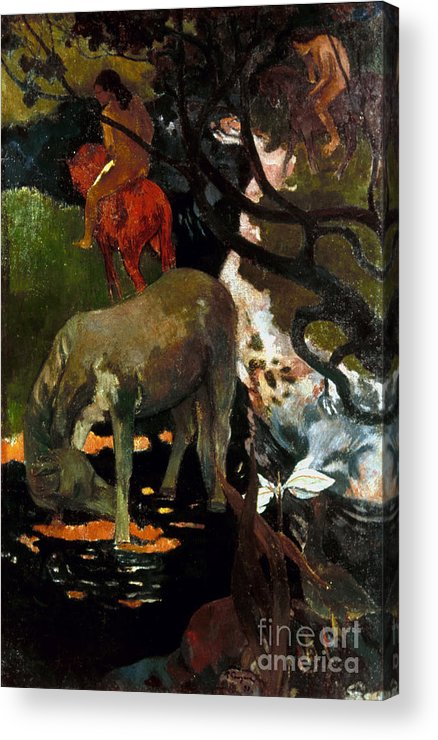 1898 Acrylic Print featuring the photograph Gauguin: White Horse, 1898 by Granger