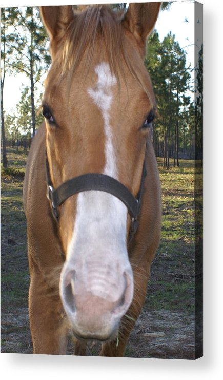 Horse Acrylic Print featuring the painting Got Sugar by Debbie May