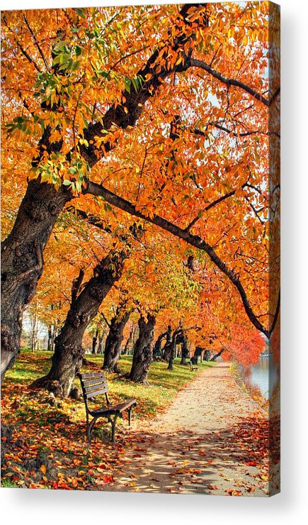 Autumn Acrylic Print featuring the photograph Mute Appeal by Mitch Cat