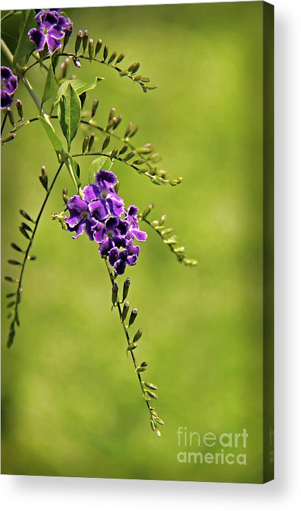 Flower Acrylic Print featuring the photograph Purple by Gayle Johnson