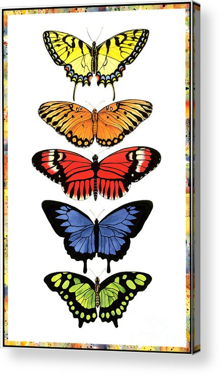 Butterflies Acrylic Print featuring the painting Rainbow Butterflies by Lucy Arnold
