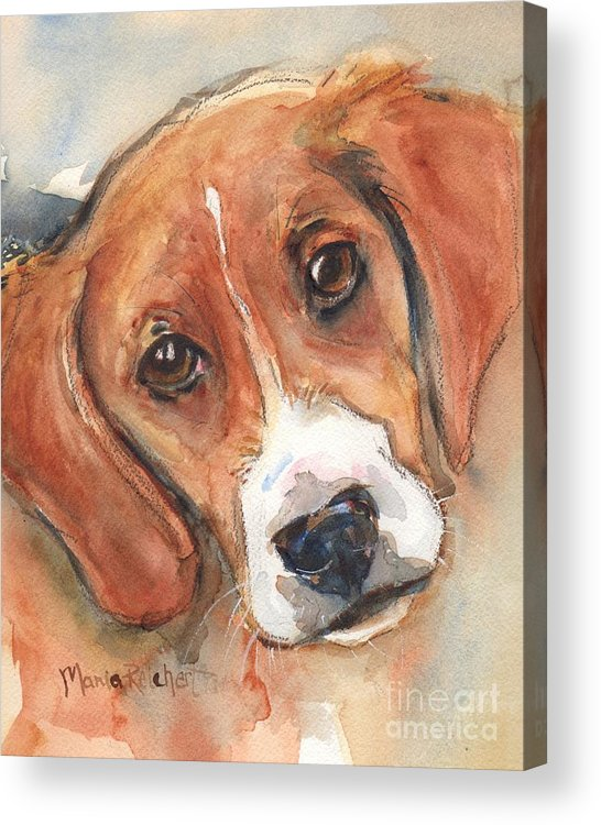 Beagle Acrylic Print featuring the painting Beagle Dog by Maria Reichert