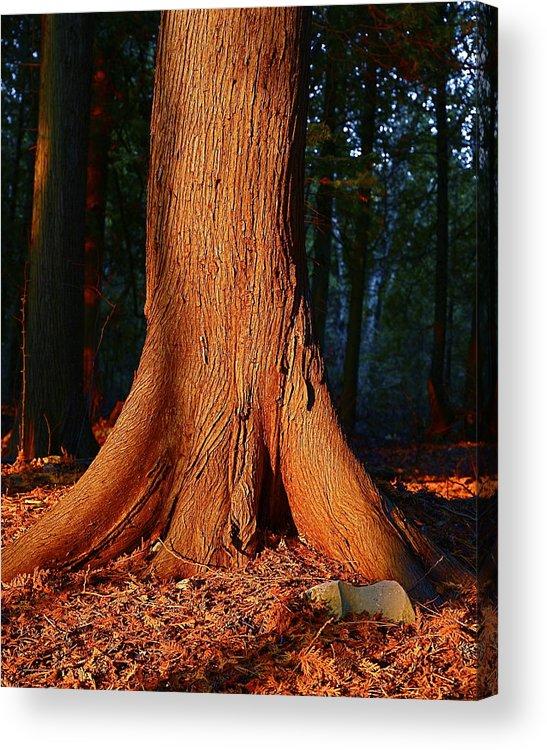 Cedar Acrylic Print featuring the photograph Cedar At Sunset by Jon Reddin Photography