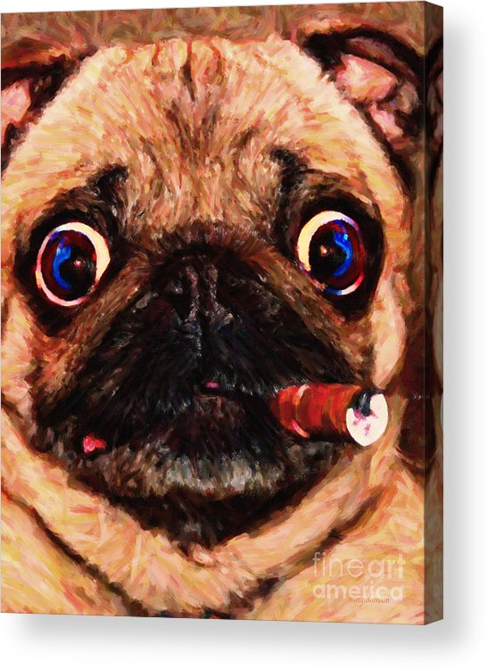 Animal Acrylic Print featuring the photograph Cigar Puffing Pug - Painterly by Wingsdomain Art and Photography