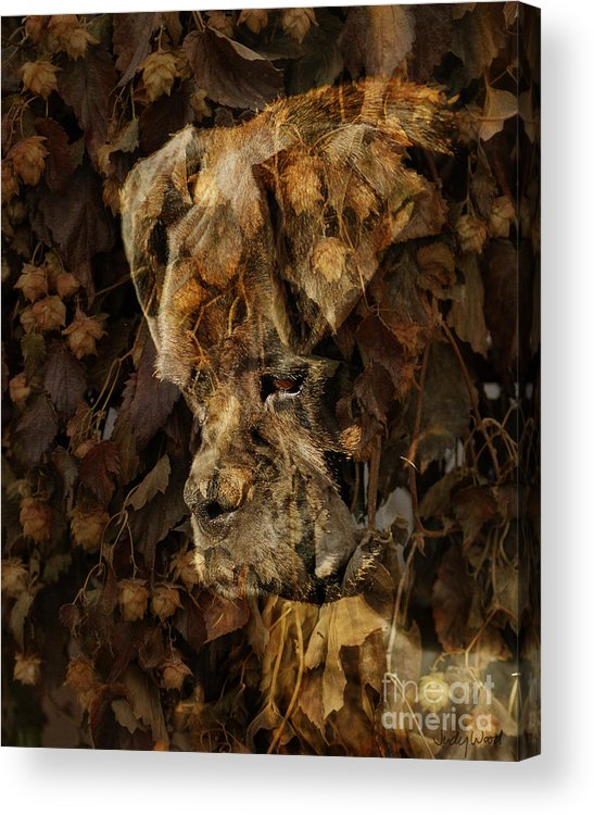 Dog Boxer Dog Acrylic Print featuring the digital art Contemplation by Judy Wood