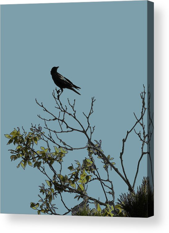 Crow Acrylic Print featuring the photograph Trickster Watch by Dora Hembree