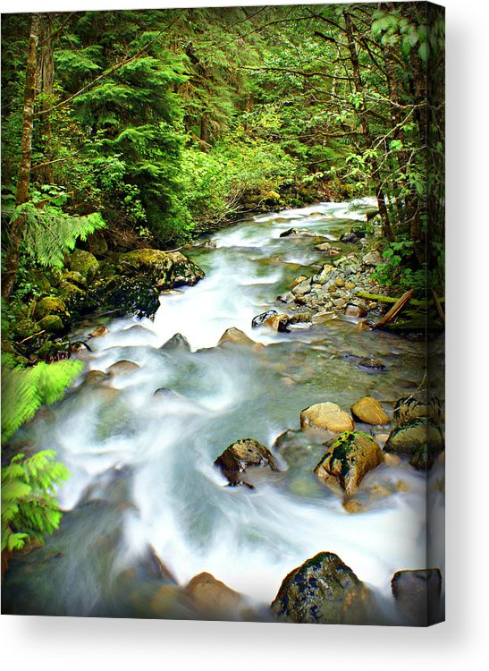 Stream Acrylic Print featuring the photograph Downstram In The Olympics by Marty Koch