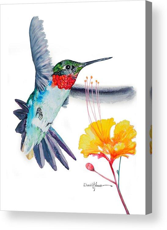 Hummingbird Acrylic Print featuring the painting Da177 Flutter By Daniel Adams by Daniel Adams