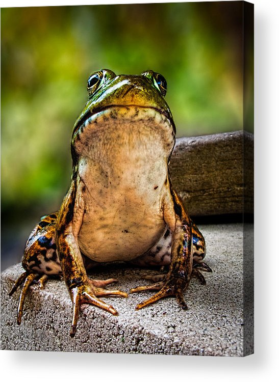 Frog Acrylic Print featuring the photograph Frog Prince Or So He Thinks by Bob Orsillo
