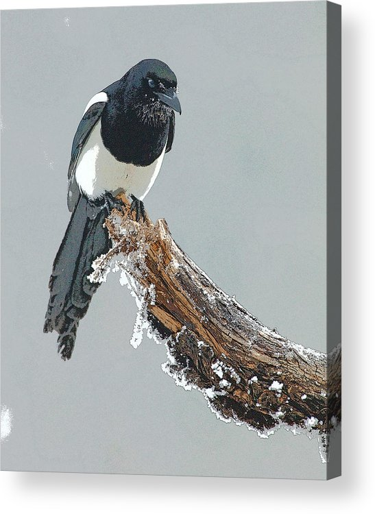 Abstract Acrylic Print featuring the digital art Frosted Magpie- Abstract by Tim Grams