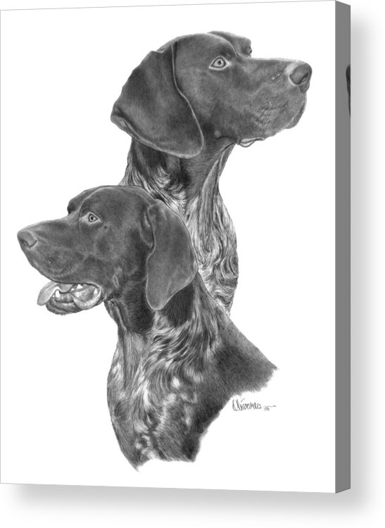 Pencil Drawing Print Acrylic Print featuring the drawing German Short-hair Pointer by Joe Olivares