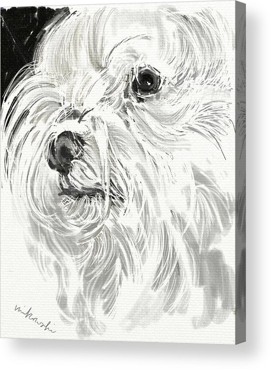 Maltese Acrylic Print featuring the jewelry Harley The Maltese by Linda Minkowski