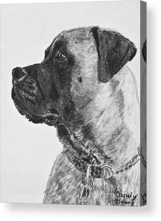 Mastiff Acrylic Print featuring the drawing Mastiff In Profile by Kate Sumners