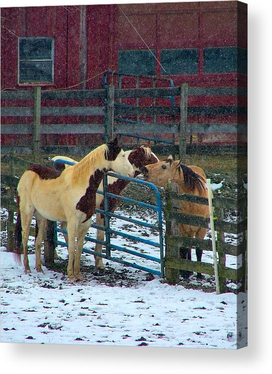 Horses Acrylic Print featuring the photograph Meeting Of The Equine Minds by Julie Dant
