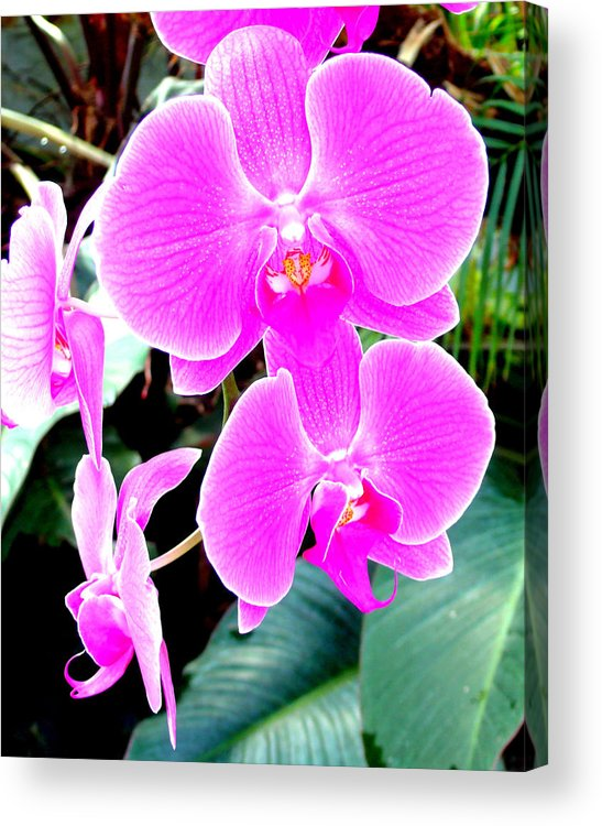 Orchid Acrylic Print featuring the photograph Orchid Series 1 by Katy Hawk