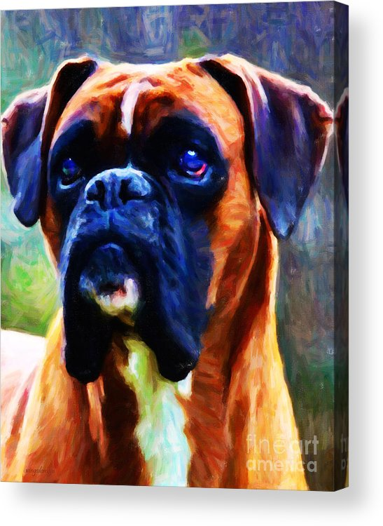 Animal Acrylic Print featuring the photograph The Boxer - Painterly by Wingsdomain Art and Photography