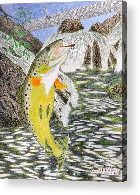 Trout Stream Acrylic Print featuring the drawing Trout Stream In May by Gerald Strine