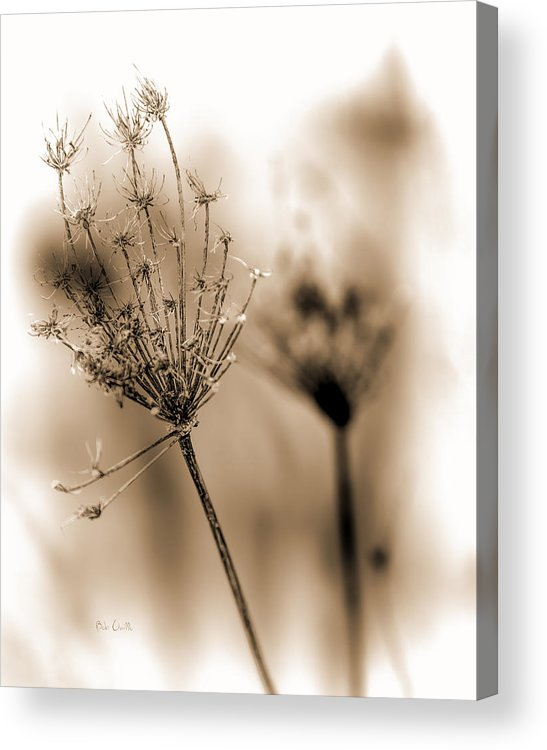 Flowers Acrylic Print featuring the photograph Winter Flowers II by Bob Orsillo