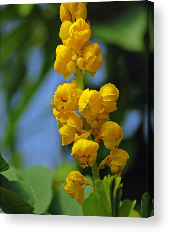 Floral Acrylic Print featuring the photograph Yellow Flowers by Diane Bell
