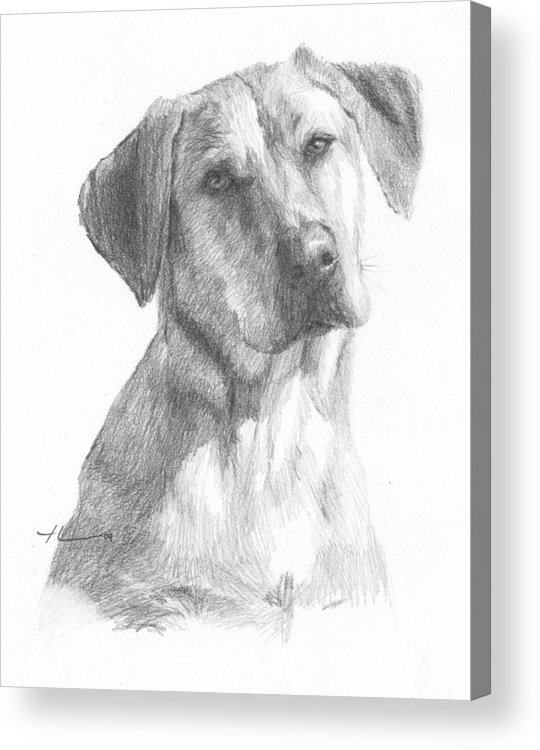 Www.miketheuer.com Yellow Lab Dog Pencil Portrait Acrylic Print featuring the drawing Yellow Lab Dog Pencil Portrait by Mike Theuer