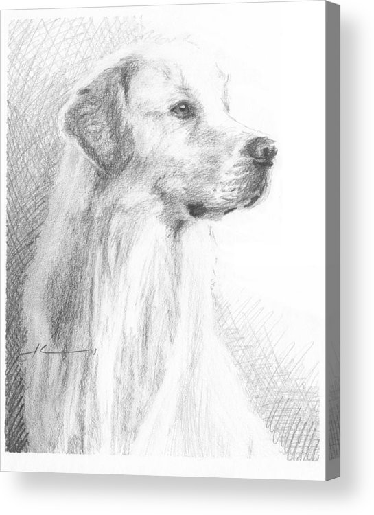 <a Href=http://miketheuer.com Target =_blank>www.miketheuer.com</a> Yellow Labrador Show Dog Pencil Portrait Acrylic Print featuring the drawing Yellow Labrador Show Dog Pencil Portrait by Mike Theuer