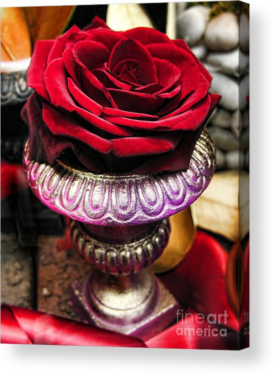 Rose Acrylic Print featuring the photograph Blood Rose In The Window by Anne Ferguson