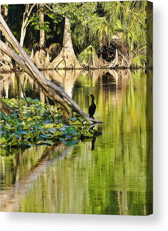 Florida Landscapes Acrylic Print featuring the photograph Cormorant On The River by Betty Eich
