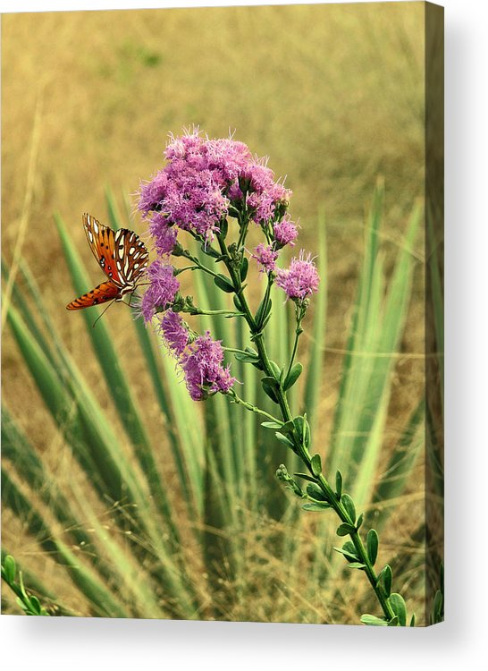 Nature Acrylic Print featuring the photograph Florida Paintbrush by Peg Urban