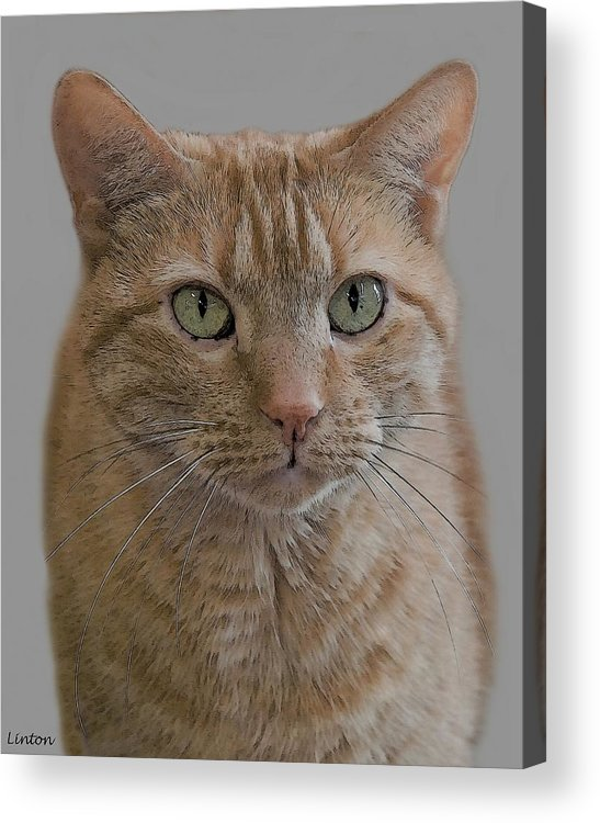 Cat Acrylic Print featuring the digital art Homeless by Larry Linton